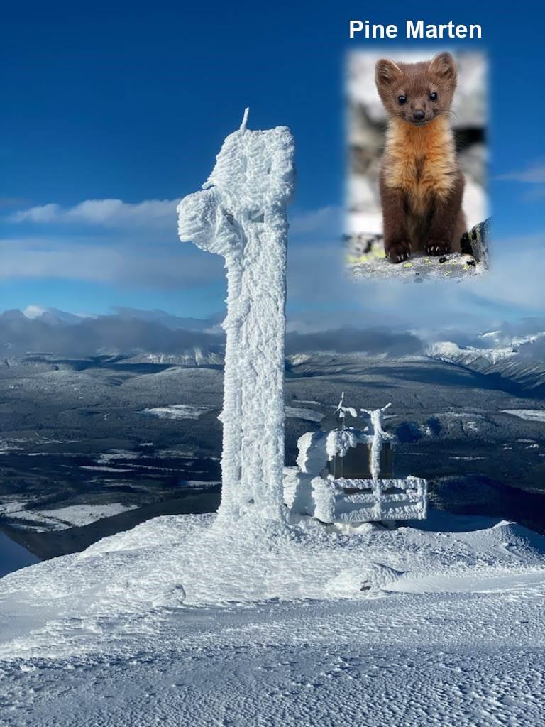 Mt_Morice-Rime-1-2-Pine-Marten